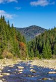 Autumnal landscape with river in spruce forest. Autumnal landscape with narrow river in spruce forest. beautiful nature scenery mountainous area under blue sky Royalty Free Stock Photo