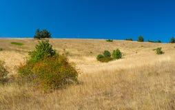 Autumnal landscape with rosa canina(dog-rose) shrubs on Ai-Petri mountain Royalty Free Stock Photos