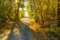 Autumnal landscape with sunbeam in mixed forest in Sumskaya oblast, Ukraine. Morning autumnal landscape with sunbeam in mixed forest in Sumskaya oblast, Ukraine Stock Photography