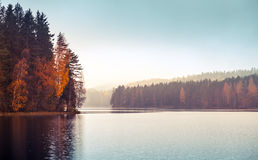 Autumnal landscape with threes on a lake coast. Autumnal landscape with threes on a coast, fog and still lake, colorful tonal filter photo correction Stock Photo