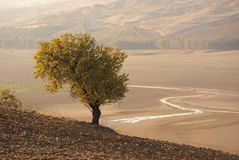 Autumnal Landscape With A Tree Stock Image
