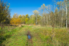 Autumnal landscape in Ukraine Royalty Free Stock Photos