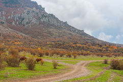 Autumnal landscape in Valley of Ghosts in Crimean mountains Stock Photography