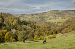 Autumnal landscape of the village hills. Autumnal landscape of the idylic hills in the village Holbav, Brasov County, Romania Royalty Free Stock Photography
