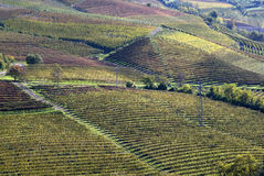Autumnal landscape of vines and hills in Langhe Royalty Free Stock Photography
