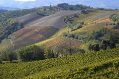 Autumnal landscape of vines and hills in Langhe Stock Photo