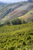 Autumnal landscape of vines and hills in Langhe Stock Image