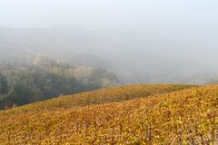 Autumnal landscape of vines and hills in Langhe, Northern Italy Royalty Free Stock Photography