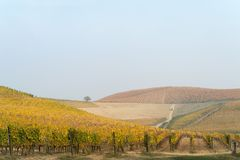 Autumnal landscape of vines and hills in Langhe, Northern Italy Stock Images