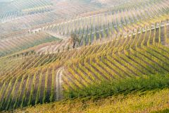 Autumnal landscape of vines and hills in Langhe, Northern Italy Stock Photography