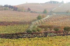 Autumnal landscape of vines and hills in Langhe, Northern Italy Royalty Free Stock Photos