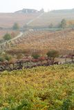 Autumnal landscape of vines and hills in Langhe, Northern Italy Royalty Free Stock Image