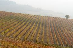 Autumnal landscape of vines and hills in Langhe, Northern Italy Royalty Free Stock Photo