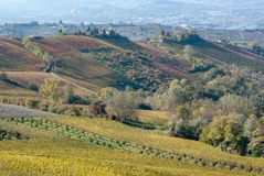 Vines and hills in Langhe. Italy Stock Images