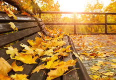 Autumnal landscape with wooden bench Royalty Free Stock Photography
