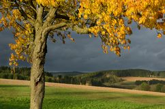 Autumnal landscape with yellow cherry tree and dramatic sky royalty free stock photos
