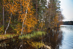 Autumnal landscape with yellow leaves on threes and still lake Stock Photography