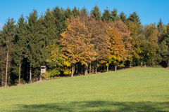Autumnal laurels in front of green conifers with high seat Stock Image