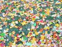 Autumnal lawn Royalty Free Stock Photo