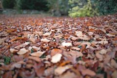 Autumnal lawn in garden. Brown leaves with bokeh on ground Royalty Free Stock Photography