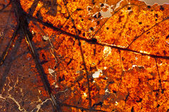 Autumnal leaf. Macro view of back lit Autumnal leaf surface Royalty Free Stock Images