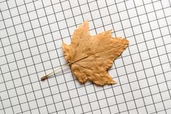 Autumnal leaf. On exercise book page Stock Photos