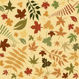 Autumnal leaf background Stock Images