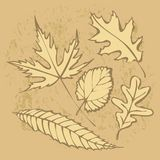 Autumnal leaf background Stock Images