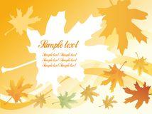 Autumnal leaf background Stock Photo