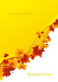 Autumnal_leaf_background Stock Image