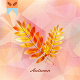 Autumnal leaf background made of triangles. Autumnal leaf background made of triangles Retro background. EPS10 Stock Photo