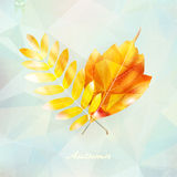 Autumnal leaf background made of triangles. Autumnal leaf background made of triangles Retro background. EPS10 Stock Photography