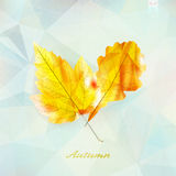 Autumnal leaf background made of triangles. Stock Images