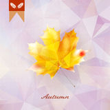 Autumnal leaf background made of triangles. Royalty Free Stock Photo