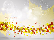 Autumnal leaf background, vector illustration Royalty Free Stock Photos