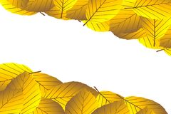 Autumnal leaf of beech. Autumn -  beech leaves - vector background, Autumnal leaf of beech, Fagus sylvatica Stock Photos