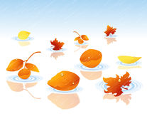 Autumnal leaf falling in the water Royalty Free Stock Images