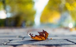 Autumnal leaf on the ground. At the road Stock Photography