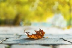 Autumnal leaf on the ground. At the road Royalty Free Stock Image