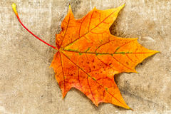 Autumnal  leaf on grunge cloth texture Royalty Free Stock Image