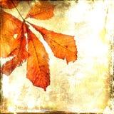 Autumnal leaf of horse chestnut. Vintage background. Royalty Free Stock Images