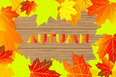 Autumnal leaf of maple. Autumn - maple leaves - vector background, Autumnal leaf of maple, Acer Stock Images