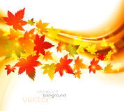 Autumnal leaf of maple. And sunlight background Royalty Free Stock Photography
