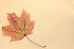 Autumnal leaf on old paper Stock Photos