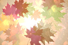 Autumnal leaf pattern in warm tones Royalty Free Stock Images