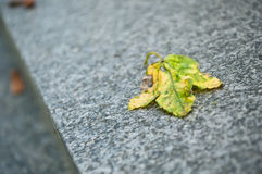 Autumnal leaf on a tomb in cemetery Royalty Free Stock Photo