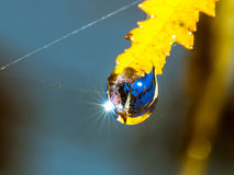 Autumnal leaf with water drop. Sky reflections Royalty Free Stock Photo