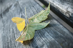 Autumnal leaf on wooden bench Stock Photos