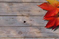 Autumnal leafs on a boards Stock Image