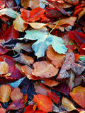 Autumnal leafs on the ground Royalty Free Stock Photos